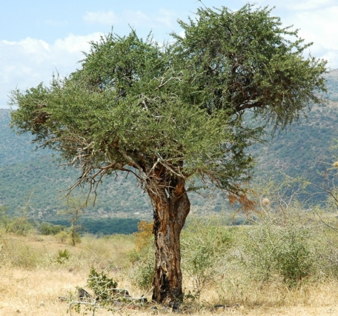 South african plants and trees - photo#23