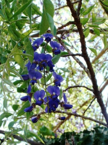 South african plants and trees - photo#17